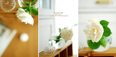 Gardenia01