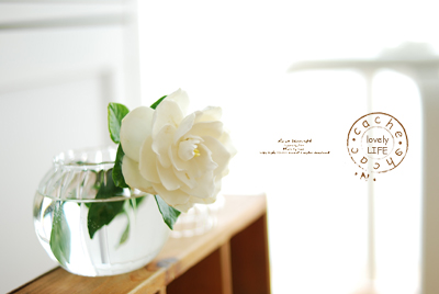 Gardenia02