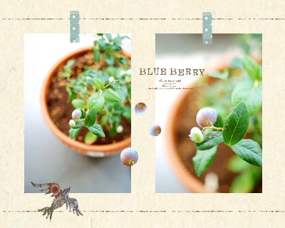 Blueberry01_2