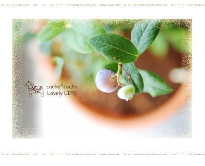 Blueberry02_2