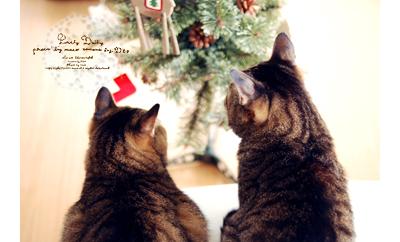 Christmastree04_2