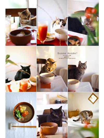 Happynewyear2010cats
