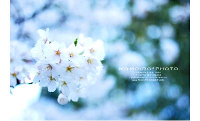 Momoirophoto03