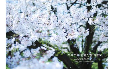 Momoirophoto04