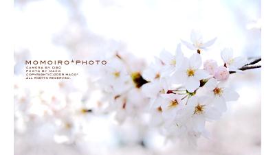 Momoirophoto05_2