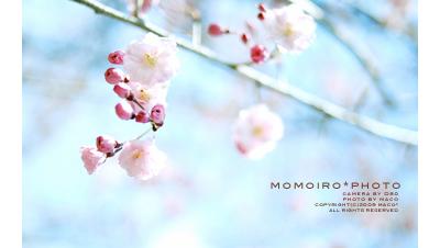 Momoirophoto07_3