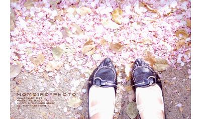 Momoirophoto08