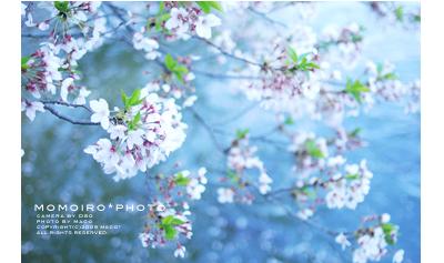 Momoirophoto09