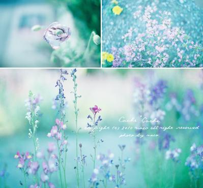 Hana01filmphoto