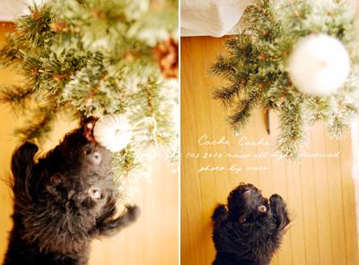 Christmas201002