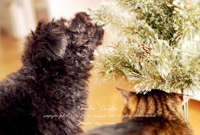 Christmas201003
