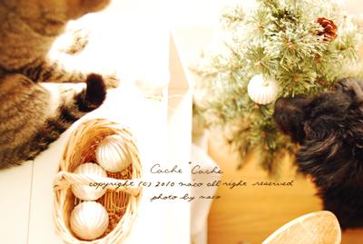 Christmas201004