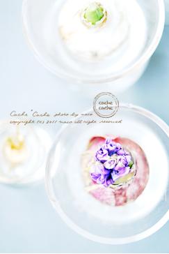 Hyacinth01