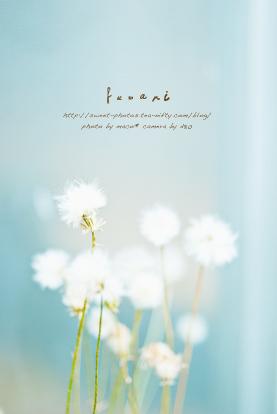 Fuwari_2