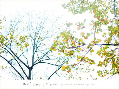 Akisanpo20112_2