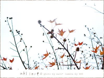 Akisanpo201105