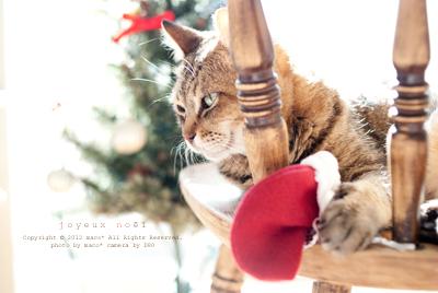 Christmas201113