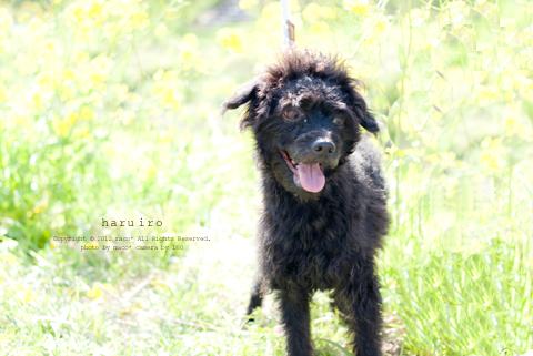 Haruiro201204