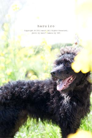 Haruiro201205