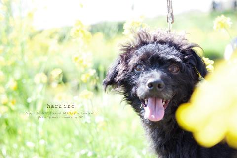 Haruiro201206