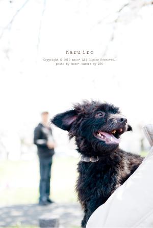 Haruiro201212