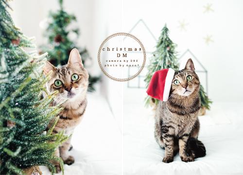 Christmasdm201305